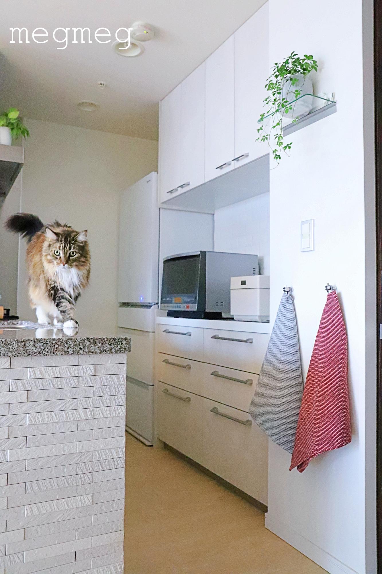 キッチンをシンプルにする収納のコツ