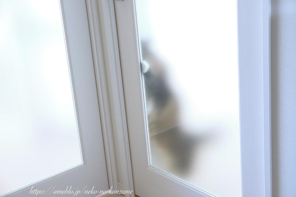 フロストガラスの透け感