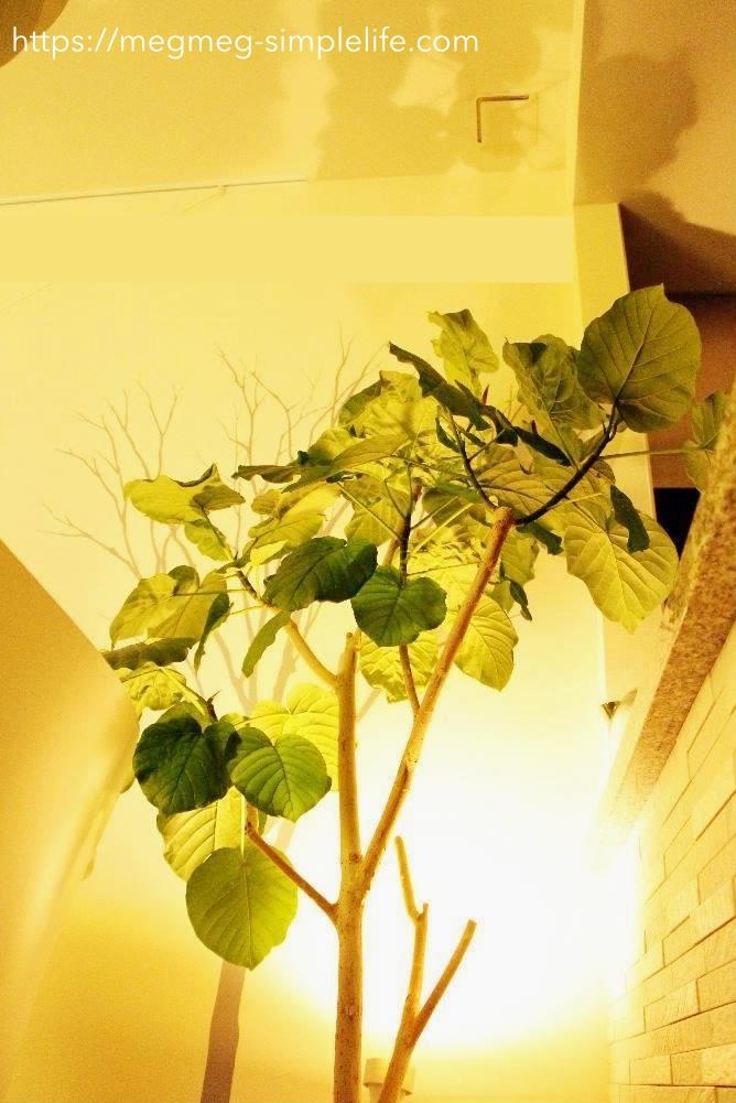 観葉植物にクリップライト