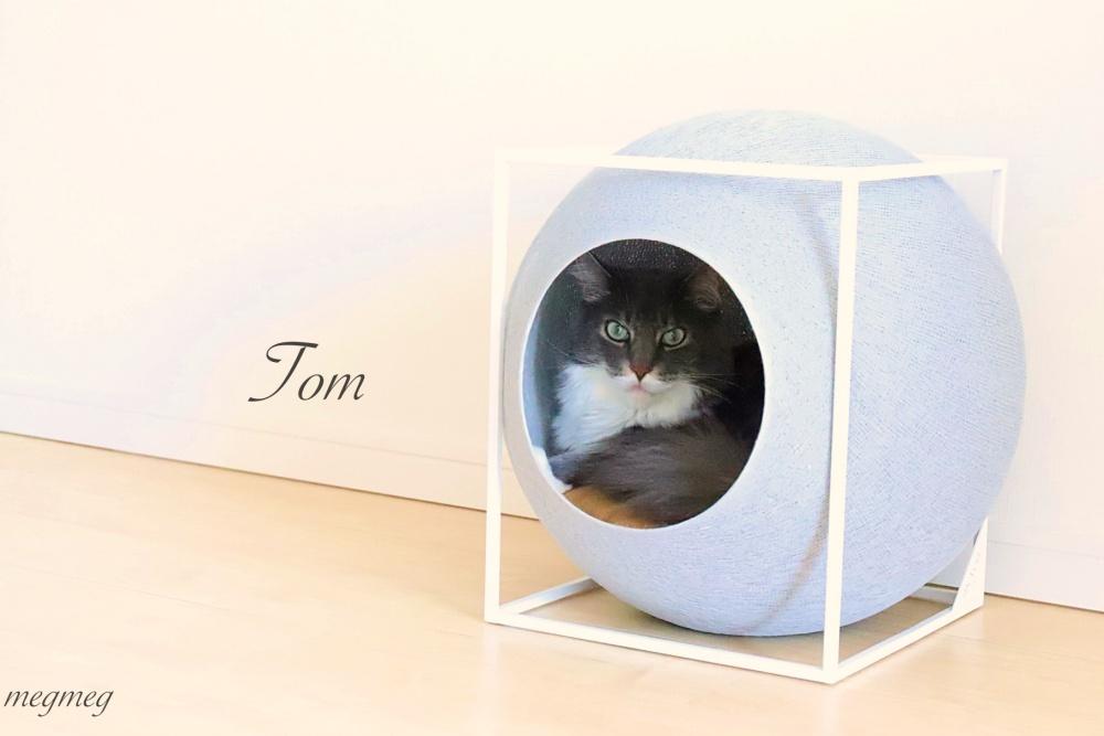 トムの寝床